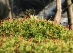 1306 Moss