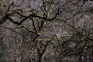 1306 mossy trees