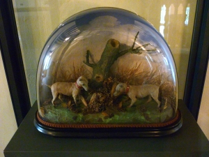 1309 Victorian Taxidermy (1)
