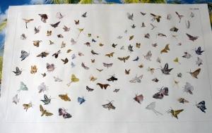 1309 Moths