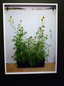 Alison Stolwood Dark Green Fritillary on Wildlife Attracting Mix