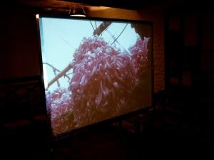 Jackie Chettur Ivor's Chrysanthemums'