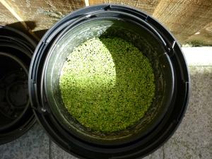 1408 back yard algae