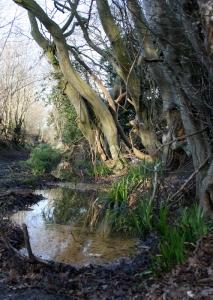 1504 paradise bridle path