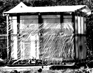 1508 shed