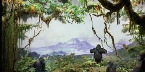 1601 Carl Akeley gorillas
