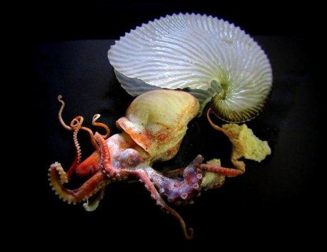 1602 paper nautilus