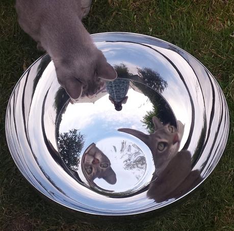 1607 new bowl
