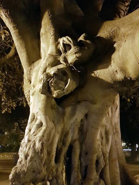 1805 Valencia tree