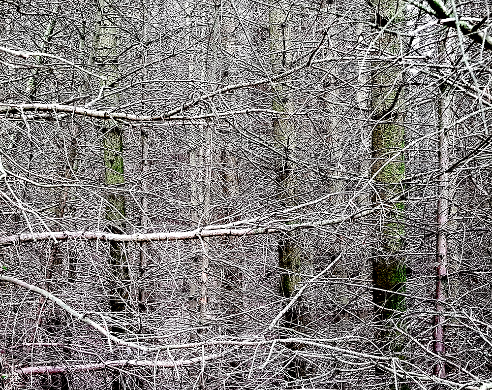 1806 Allendale Impenetrable forest