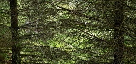 1806  forest.jpg