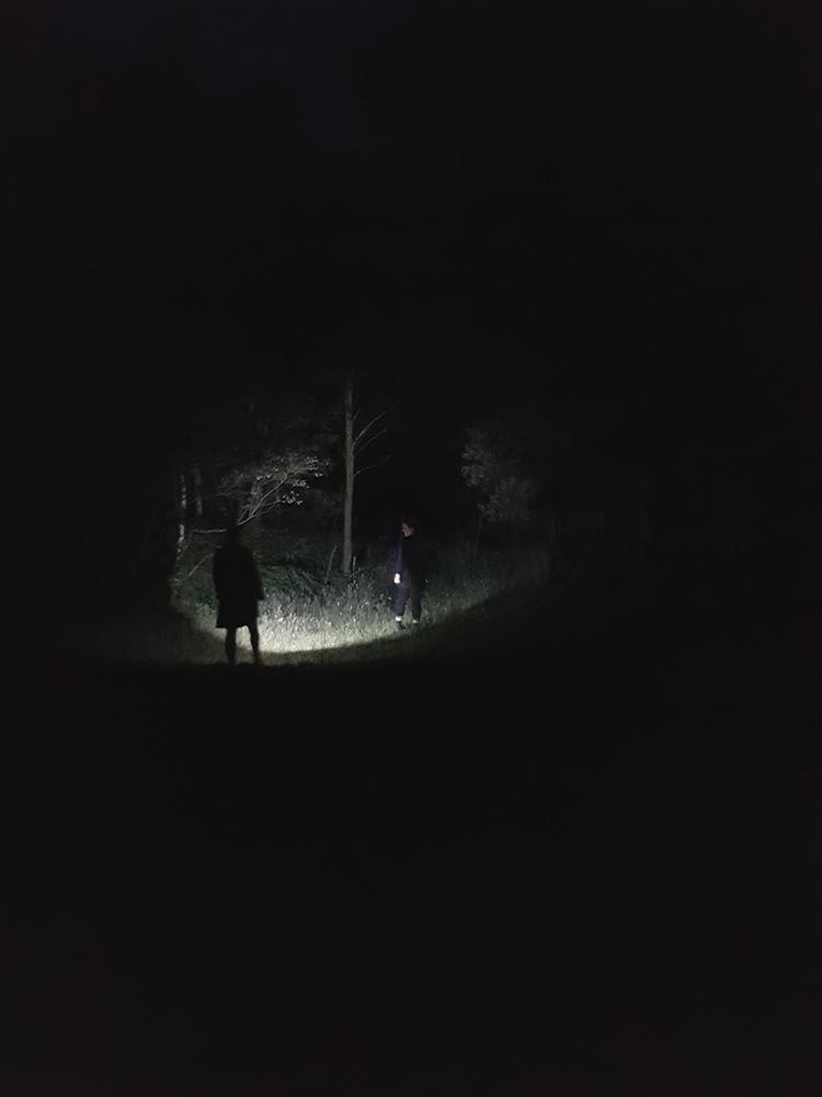 1807 Grizedale nightime trek