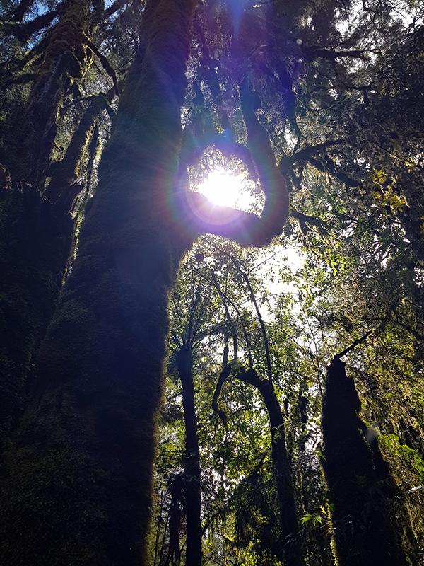 1812 Lake Mathesan forest