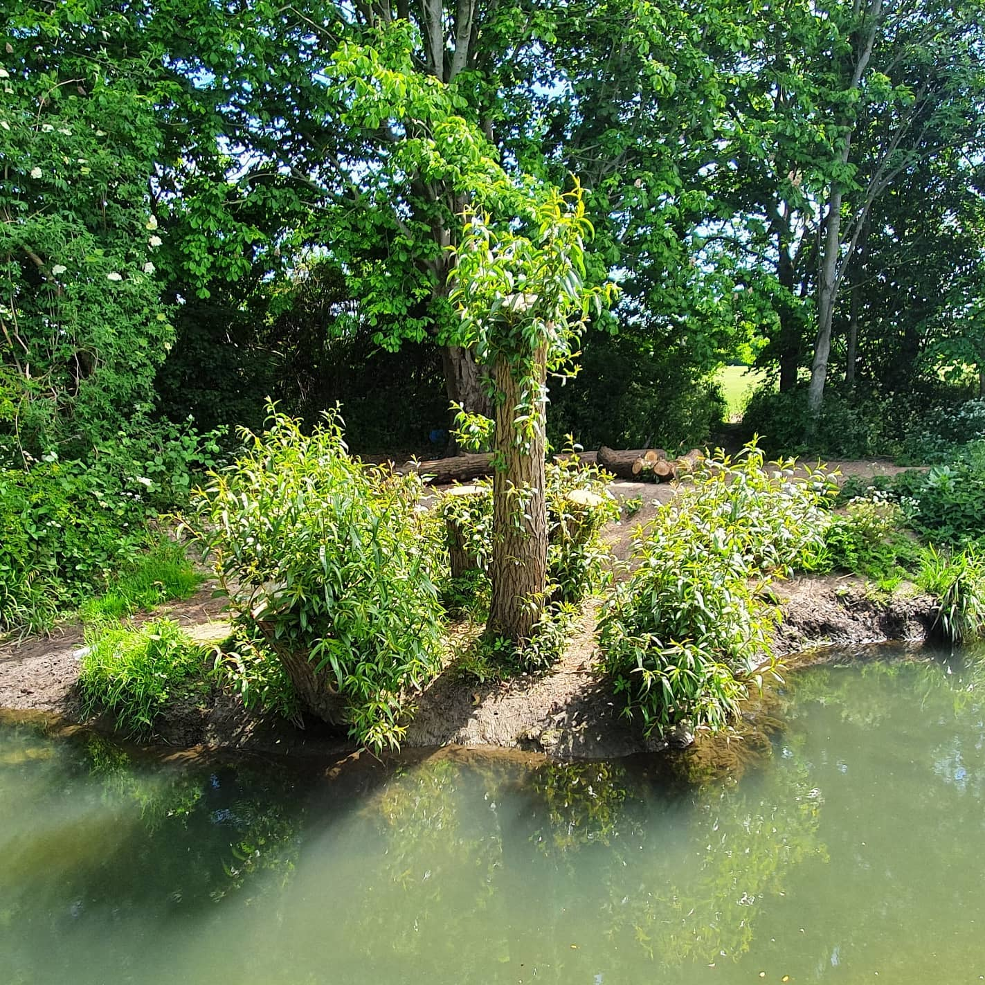 2008 stumpy4 (3)