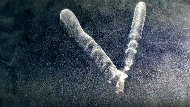 2011 cosmic trail V