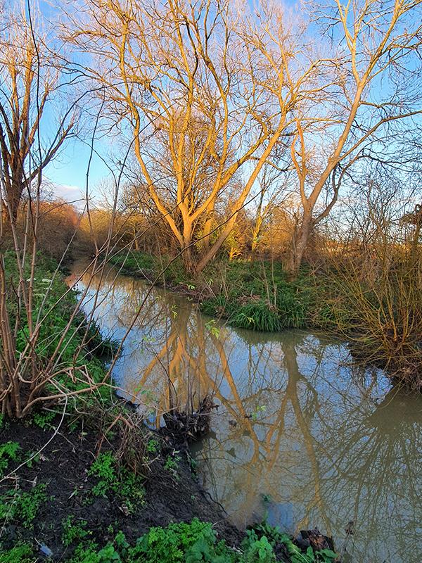 2012 shoreline to shoreline